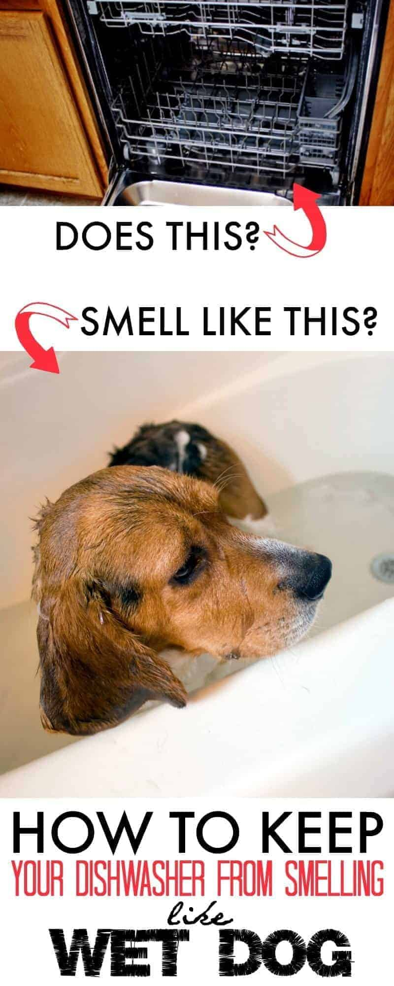 Eggs & others foods can cause strange things to happen when they get wet. And if you wonder why does my dishwasher smell like wet dog? you may need this easy trick!