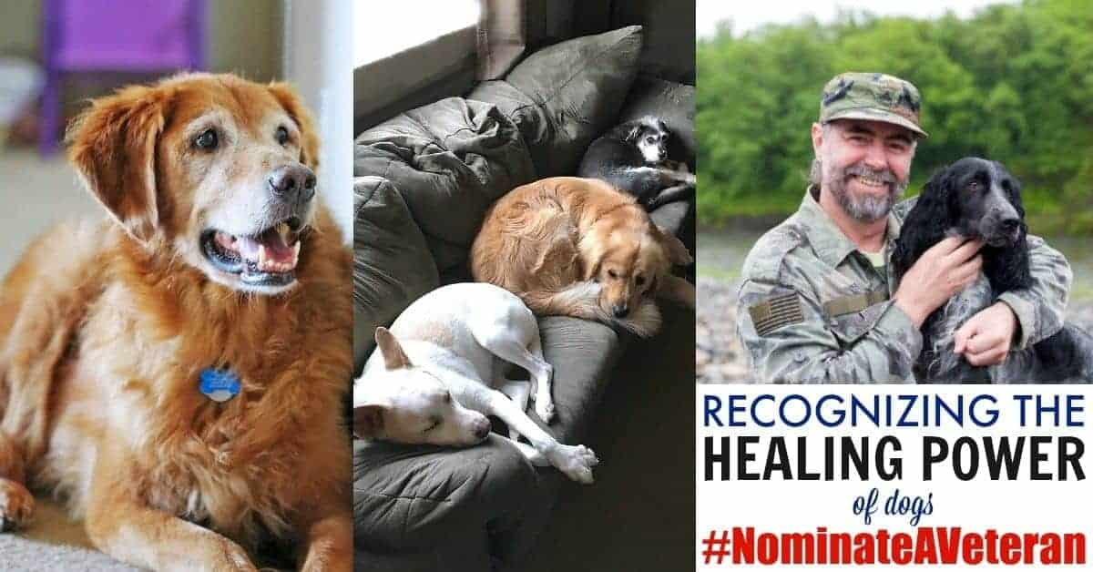 Dogs can heal! #NominateAVeteran with Heartgardians to help bring the healing power of dogs to service members, veterans & their families.