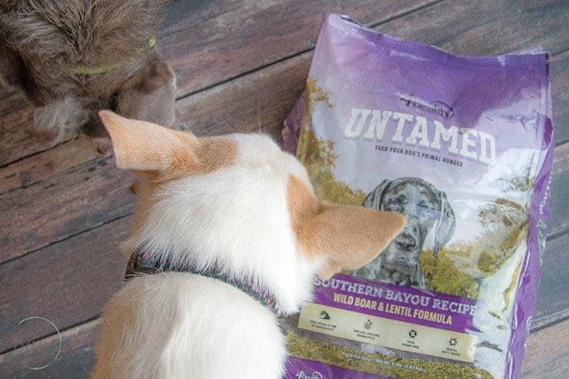 4health UNTAMED Dog Food Review + Free Printable Feeding Schedule - quality grain-free food that provides complete nutrition for your dog.