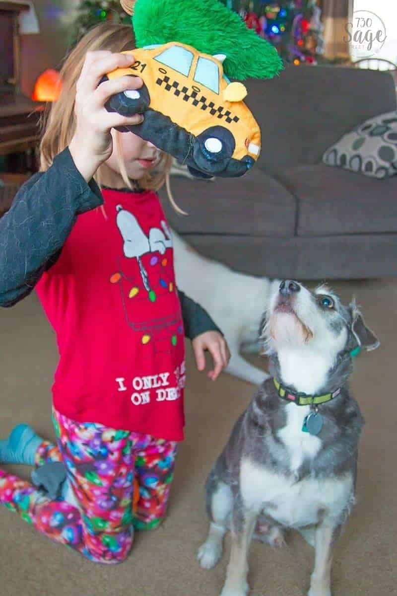 girl holding a dog toy with a grey dog staring at it