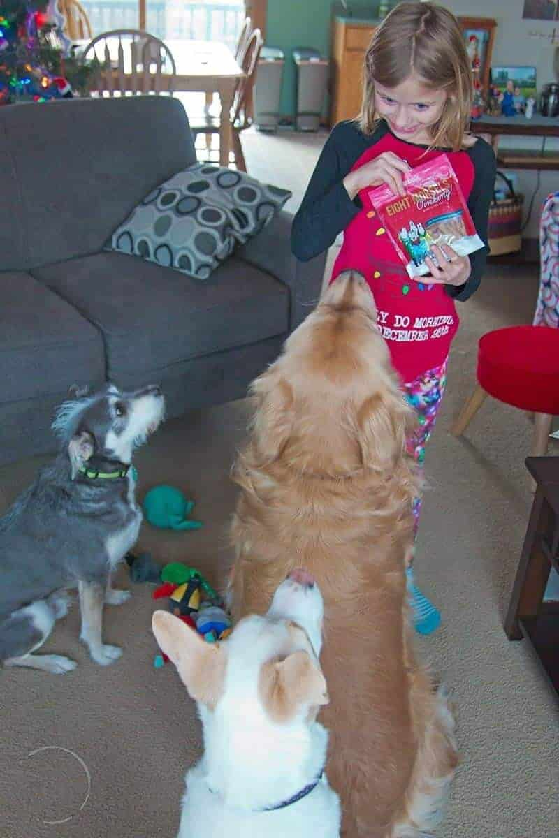 girl holding a bag of dog treats with three dogs looking on