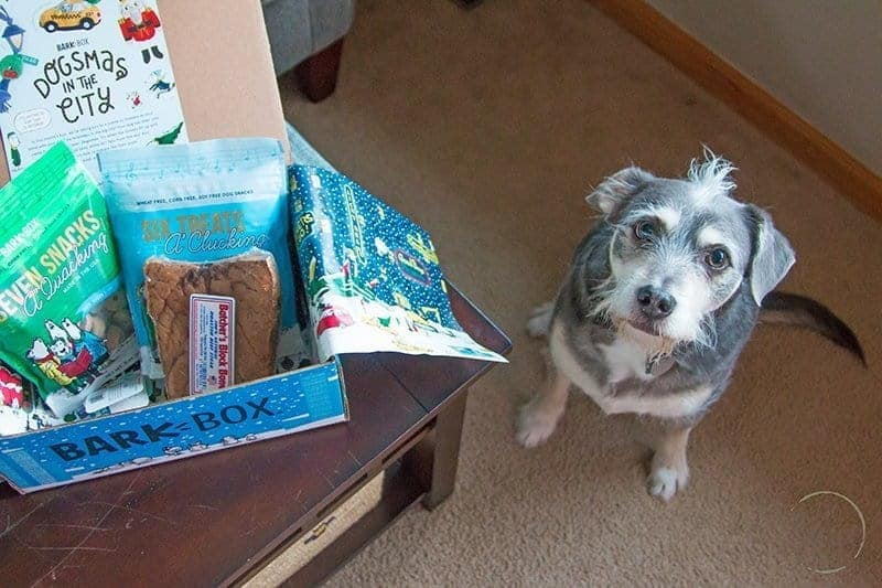 small dog sitting next to a table with a box of dog treats and toys