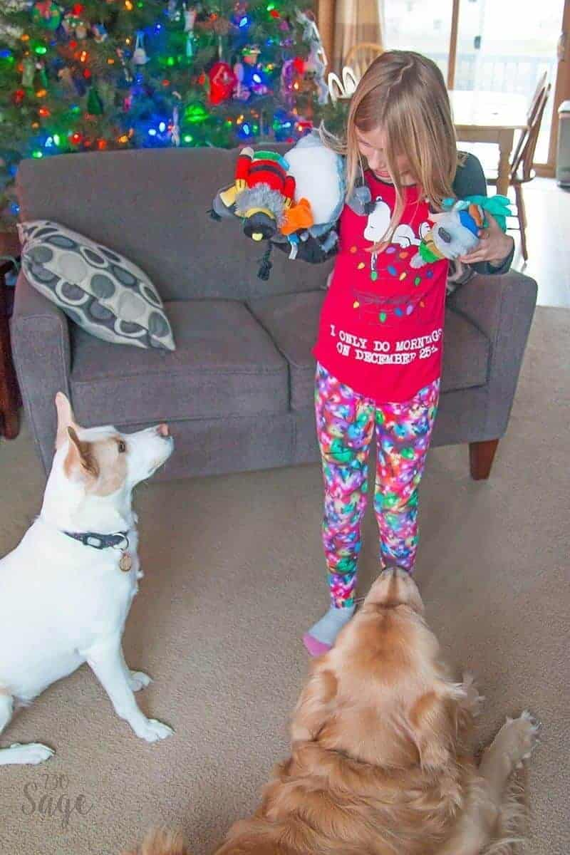 girl holding a bunch of dog toys with two dogs looking on