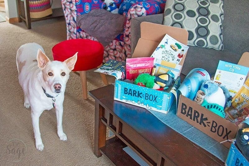 Barkbox on a table with a white dog nearby