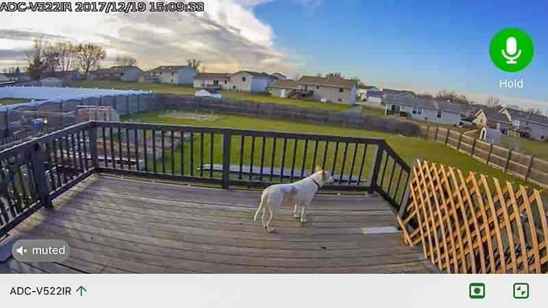 Frontpoint Security Setup camera screenshot white dog on wooden deck
