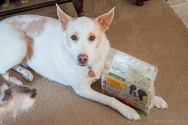 white dog next to a bag of Freshpet dog food