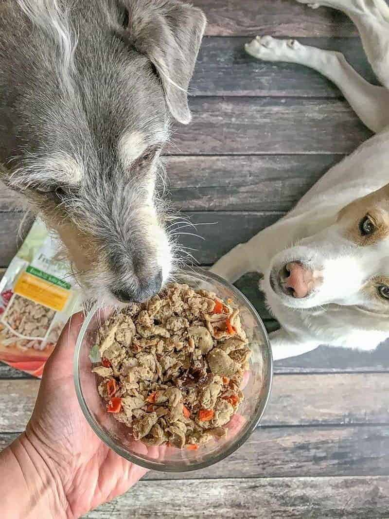 Freshpet Select in a glass bowl with dogs sniffing
